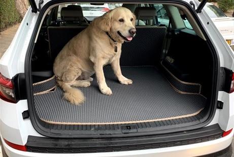 כלב בתוך הרכב על שטיחי SASA